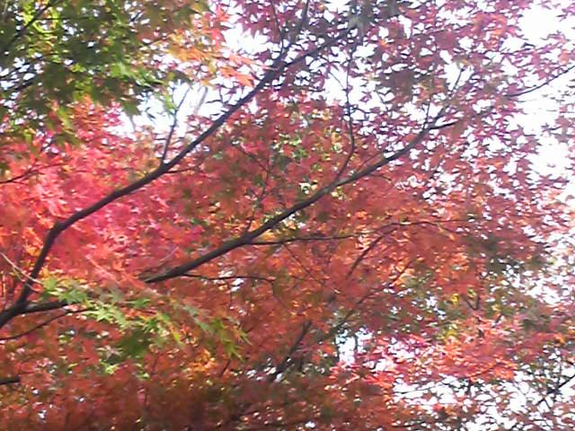 秋葉公園の紅葉