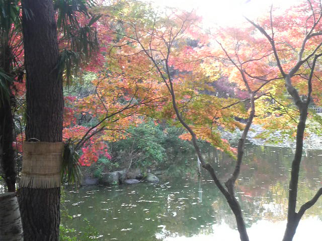 秋葉公園の池