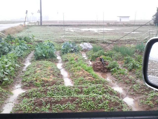 車窓からみた畑