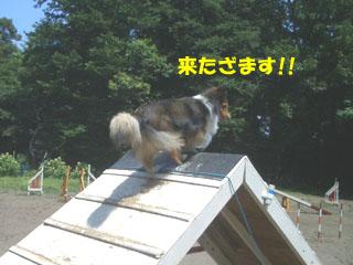 登りに来たざますよ。