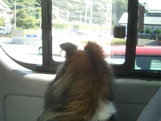 こんなに天気が良いざますから、ドライブへ行くざますよ。