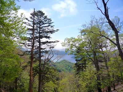 稜線から望む中禅寺湖 (「高山」の稜線は樹林が多く展望はあまりよくありません)