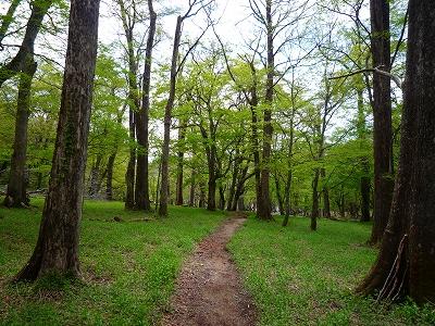 「高山」から中禅寺湖へと下る公園の遊歩道のような山道