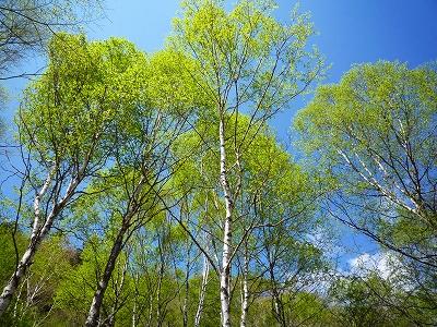 爽やかな青空に鮮やかな新緑が映えます