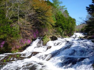 登山口の竜頭の滝(ミツバツツジはまだ少ししか咲いていませんでした)