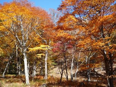 ちなみに紅葉の時季はこんなカンジになります