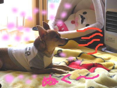 snap_yamatoss_200910122474.jpg