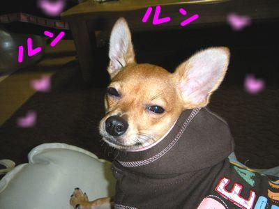 snap_yamatoss_200910123346.jpg