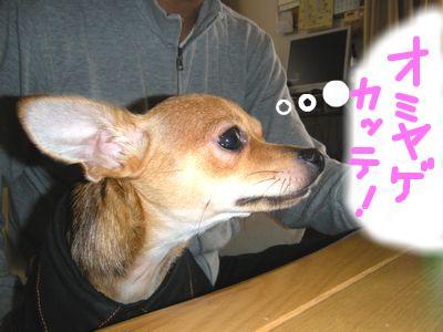 snap_yamatoss_200910415026.jpg