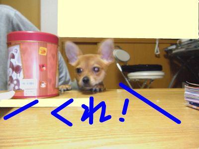 snap_yamatoss_2009104231044.jpg