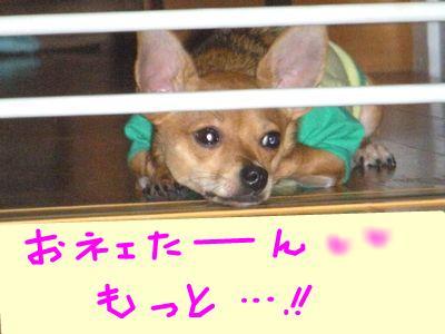 snap_yamatoss_200910523323.jpg