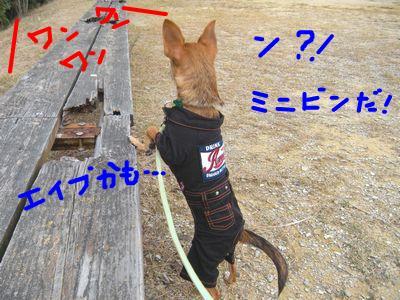 snap_yamatoss_2009106144319.jpg