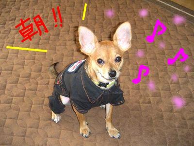 snap_yamatoss_20091061502.jpg