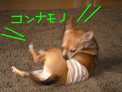 snap_yamatoss_2009106223336.jpg