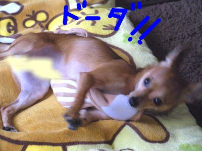 snap_yamatoss_2009106223756.jpg