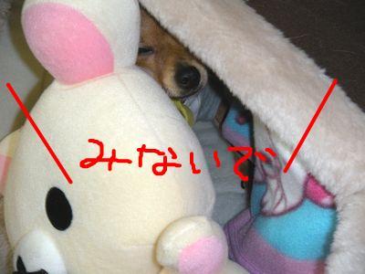 snap_yamatoss_20091112152.jpg