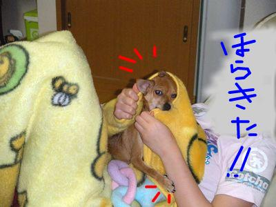 snap_yamatoss_200990213624.jpg
