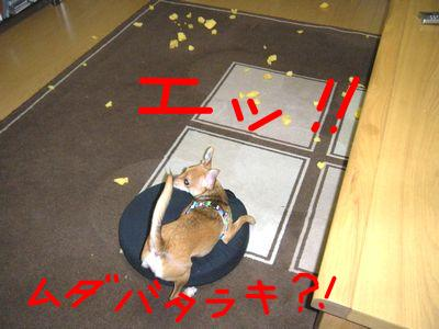 snap_yamatoss_20099322575.jpg