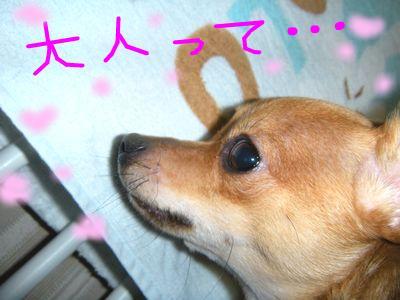 snap_yamatoss_200993232447.jpg
