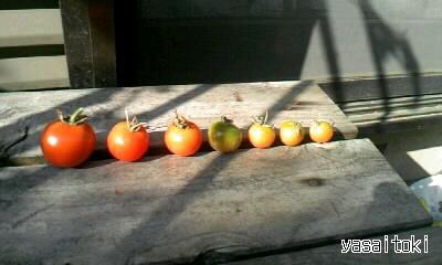 091106今日の収穫