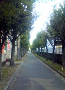 遊歩道01