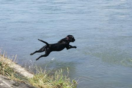 RUN こまち 水遊び
