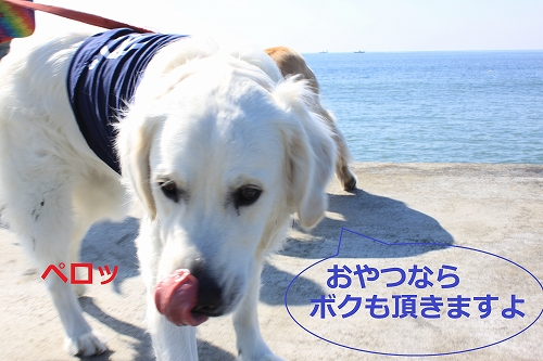 s-IMG_0016_20110401225908.jpg