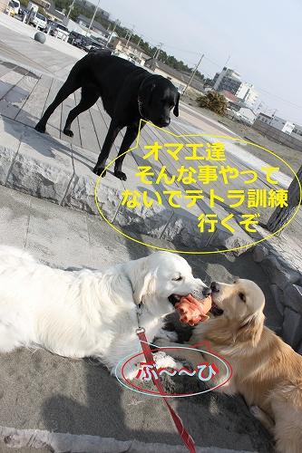 s-IMG_0067_20110402205129.jpg