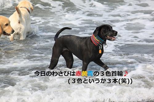 s-IMG_0073_20110606125727.jpg