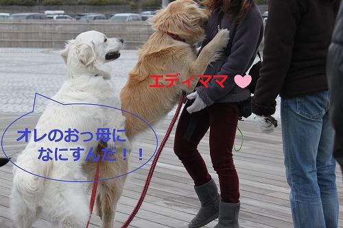 s-IMG_0091_20110403224046.jpg
