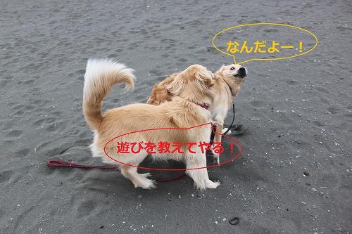 s-IMG_0104_20110403224043.jpg