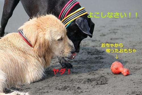 s-IMG_0110_20110606130125.jpg