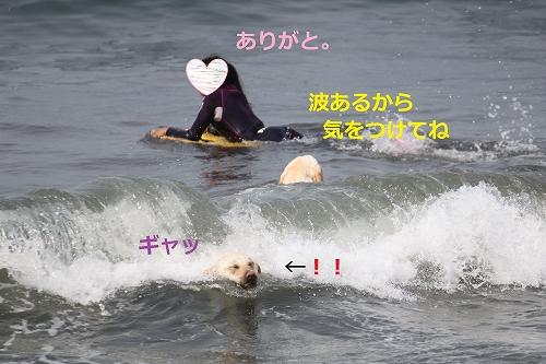 s-IMG_0116.jpg