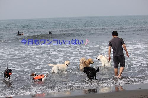 s-IMG_0143_20110606130315.jpg