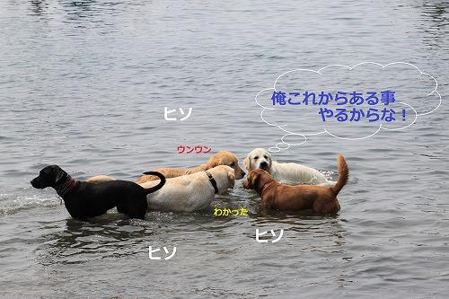 s-IMG_0153_20110606130314.jpg
