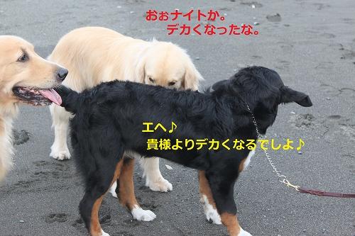 s-IMG_0184_20110609223029.jpg