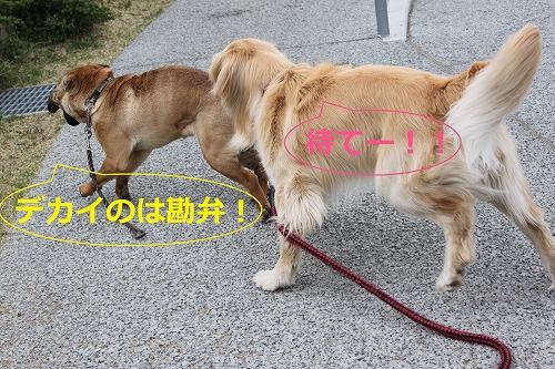 s-IMG_0281.jpg