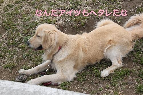 s-IMG_0282_20110408215050.jpg