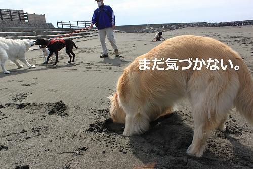 s-IMG_0288_20110410205721.jpg
