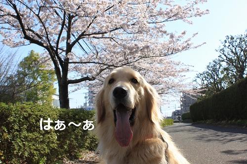 s-IMG_0323_20110412213803.jpg