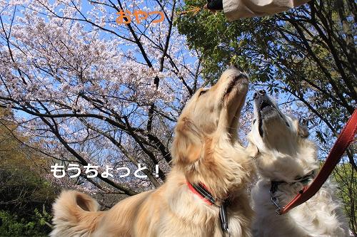 s-IMG_0342_20110412214004.jpg