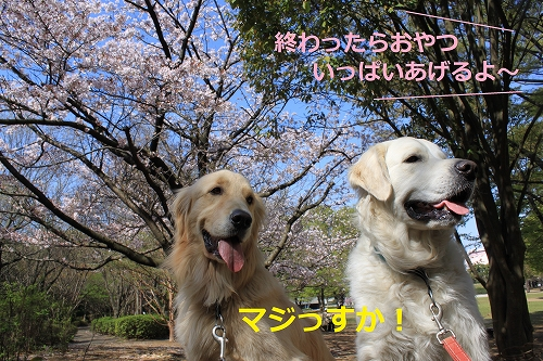 s-IMG_0351_20110412214046.jpg