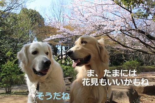 s-IMG_0359_20110412214045.jpg