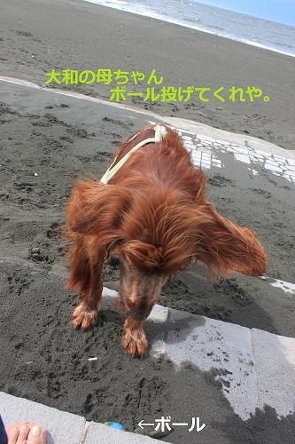 s-IMG_0440_20110621221250.jpg