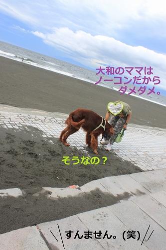 s-IMG_0441_20110621221249.jpg