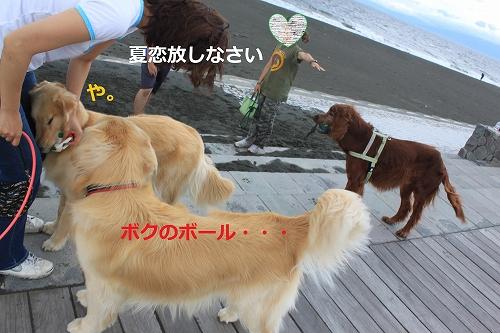 s-IMG_0447_20110621221248.jpg