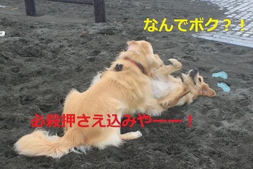 s-IMG_0466_20110621221424.jpg