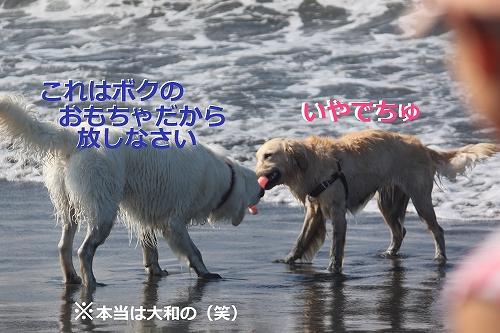 s-IMG_0504_20110623165350.jpg