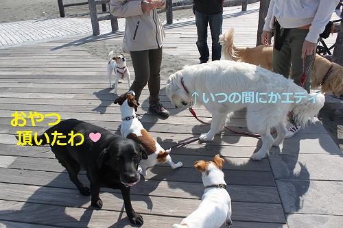 s-IMG_0510_20110417212056.jpg
