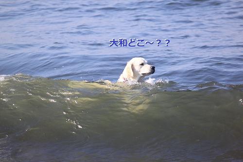 s-IMG_0526_20110623165746.jpg